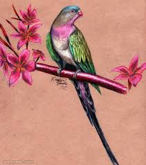 how to draw beautiful drawing brds beautiful bird pencil and in color brds