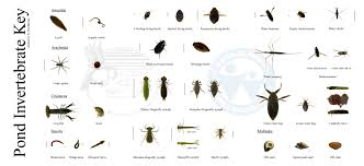 unit 1 diversity of living things mrs deacon