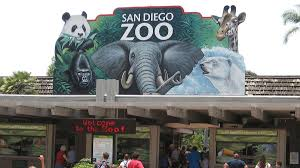 standing in solidarity the san diego zoo is obse clickhole