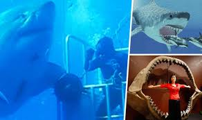 biggest megalodon shark did real life megalodon swim past cage divers or just world s