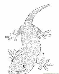 tokay gecko lizard coloring page free lizard coloring pages