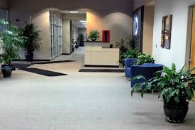 Office Plants Indoor Tropical Plants For Offices Interior Landscaping Company