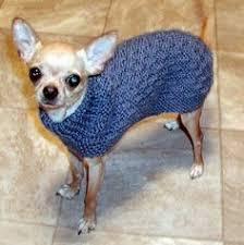 chihuahua knit sweater canine corner crochet