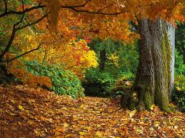 fall colors 62 wallpapers u2013 wallpapers hd