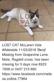 Missing Cat Meme - l d lost cat mclaren vale adelaide 11032018 benji missing from