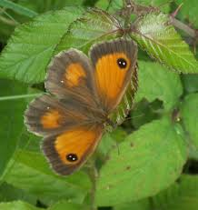 adur butterfly list 2006