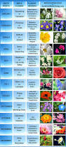 Pictures Of Flowers by Best 10 Flower Pictures Ideas On Pinterest Flowers Pretty