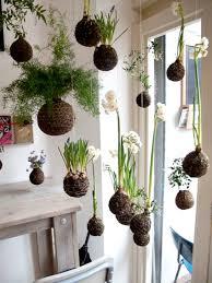 Japanese House Plants by Kokedama Panda Plant Japanese Moss Ball Panda Plant String