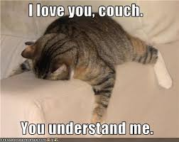 Sleeping Cat Meme - i love you couch you understand me i can has cheezburger