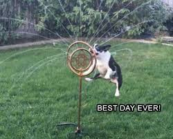 Best Day Ever Meme - this is the best day ever meme collection