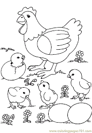coloring page of a chicken chicken coloring pages coloring page