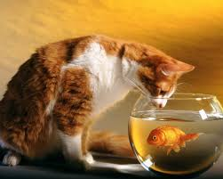 Beautiful Wallpapers Beautiful Fish Wallpapers Hd Pictures U2013 One Hd Wallpaper Pictures