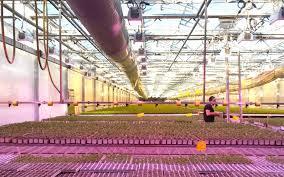 Greenhouse Lights How To Maximize Your Led Grow Lights 6 Tips Heliospectra