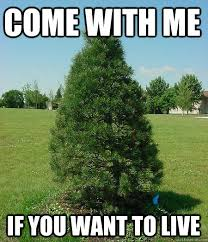 Tree Meme - 30 most funniest tree meme pictures and photos