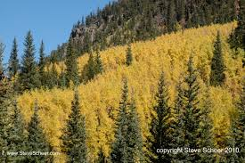 Christmas Tree Permits Colorado Buffalo Creek by Colorado Mountains Getaways U0026 Denver Skiers Archives Real
