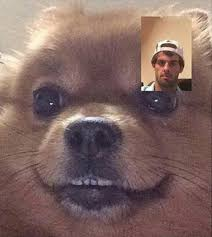Dog Phone Meme - this dog stole my moms phone and keeps face timing me telling me i