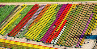 Skagit Valley Tulip Festival Bloom Map The Most Envy Inducing Instagram Destinations In The U S