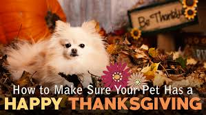 how to make sure your pet has a happy thanksgiving buffalo