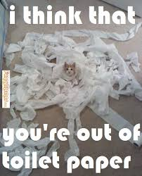 Toilet Paper Funny Cat Memes Cat Memes U2013 I Think You U0027re Out Of Toilet Paper