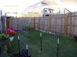 cattle panel arch trellis best house design cattle panel and
