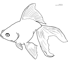 goldfish coloring pages getcoloringpages