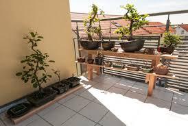 regal balkon ein bonsairegal aus holz selber bauen