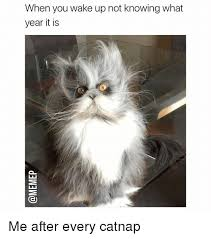 What Year Is This Meme - when you wake up not knowing what year it is me after every catnap