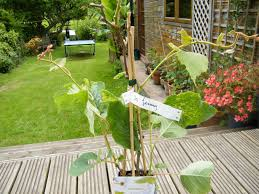 please can you give me advice on my kiwi plant plants forum at