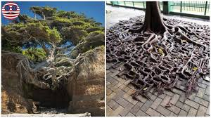 10 badass trees that refuse to die no matter what