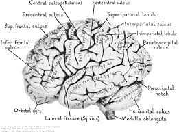 chapter 22 neurologic disorders caused by lesions in specific