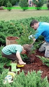 plant a tree or 2 in honor of earth day activity for kids fspdt