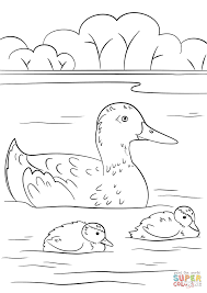 duck with ducklings coloring page free printable coloring pages