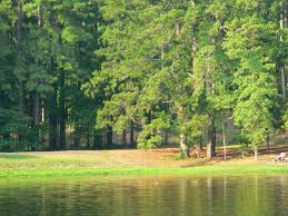 Louisiana forest images Kisatchie national forest a louisiana natlforest jpg