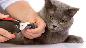 Hair Dryer Khusus Kucing cara memandikan kucing yang baik dan benar
