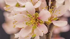 blooming flower stock footage video shutterstock