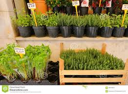 different types of fresh herbs in pots for sale stock photo
