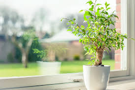 low light plants for office low light loving office plants indoor plant maintenance