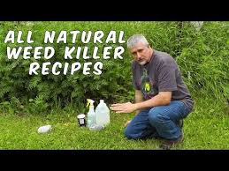 3 homemade natural weed killer recipes tested youtube