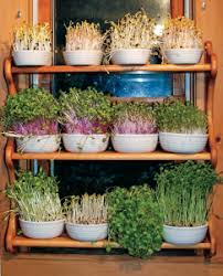 Winter Indoor Garden - a simple way to grow greens indoors even in the winter urbanfarmu