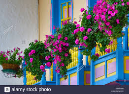 colonial balcony decorated with flowers in filandia colombia stock