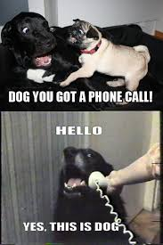 Meme Telephone - yes this is dog know your meme