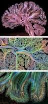 best 10 brain anatomy ideas on pinterest brain anatomy and