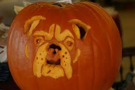 travelin u0027 jack u0027s dog blog travelin u0027 jack u0027s halloween pet safety