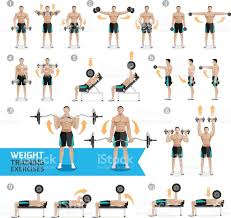 dumbbell exercises and workouts weight training stock vector art
