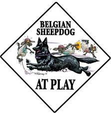 belgian sheepdog newsletter belgian sheepdog