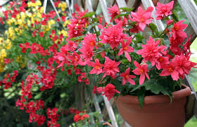 balkon grã npflanzen balkonpflanzen pflanzenreich