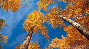 hd autumn hdwplan 1920x1080 568 23 kb