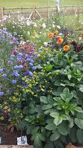 wedding flowers gloucestershire meadow flowers gloucestershire and cotswold wedding