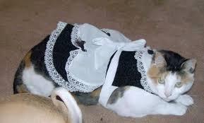Halloween Costumes Cats Wear 19 Cats Halloween