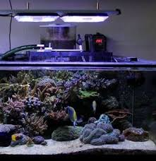 best lighting for corals aquaray led lighting reef planted aquarium lights grobeam